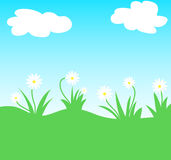 Daisy flowers. Daisy flowering plants with sky and clouds Royalty Free Stock Photography