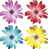 Daisy flowers vector illustration