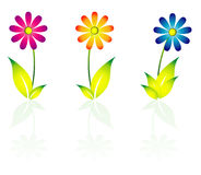 Daisy Flowers. Icon set with leafs Royalty Free Stock Photo