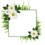 Daisy flowers  arrangement and a frame Royalty Free Stock Photography