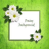 Daisy flowers  arrangement and a frame Royalty Free Stock Images