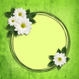 Daisy flowers  arrangement and a frame. Daisy flowers arrangement and a frame on green background Royalty Free Stock Photo