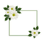 Daisy flowers  arrangement and a frame Royalty Free Stock Photos