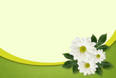 Daisy flowers arrangement. On white and green background Royalty Free Stock Images