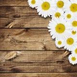 Daisy flowers arrangement Stock Photography