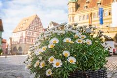 Free Daisy Flowers At Marktplatz Square Rothenburg Ob Der Tauber Old Town Bavaria Germany Royalty Free Stock Image - 161876856
