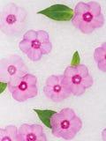 Daisy flowers background Stock Photos