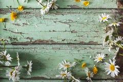 Daisy Flowers Background blanche Images libres de droits