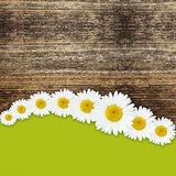 Daisy flowers background Stock Photography