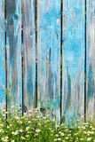 Daisy flowers on a background of wooden fence Royalty Free Stock Images