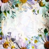 Daisy flowers border Stock Image