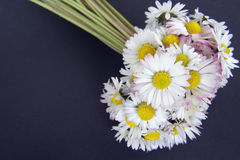 Daisy flowers bouquet Royalty Free Stock Photography