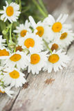 Daisy flowers. Bouquet of beautiful daisy flowers on wooden desk Royalty Free Stock Photos