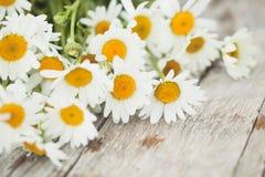 Daisy flowers. Bouquet of beautiful daisy flowers on wooden desk Stock Image