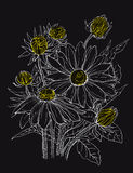 Daisy flowers in bouquet Stock Photo