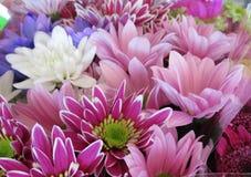 Daisy Flowers Bouquet brilhante & colorida bonita imagem de stock royalty free