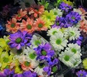Daisy Flowers Bouquet colorida atrativa brilhante bonita fotos de stock royalty free