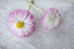 Daisy Flowers On Burlap delicata fotografie stock libere da diritti