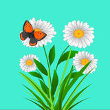 Daisy flowers and butterfly Vector Royalty Free Stock Photography