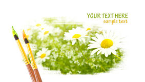 Daisy flowers design. With paintbrushes Royalty Free Stock Photo