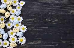 Daisy flowers and easter eggs Stock Photography