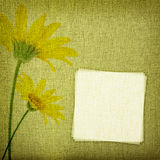 Daisy flowers on fabric background Stock Image