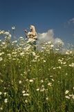 Daisy flowers field, young woman in nature. Daisy flowers field, a young woman in nature Royalty Free Stock Photography