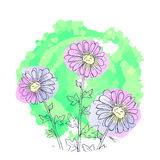 Daisy flowers, floral vector set of ink drawing plants, monochrome black line drawn elements. Daisy flowers, floral vector set of ink drawing wild plants Royalty Free Stock Images