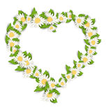 Daisy Flowers in Form Heart Isolated on White Background Royalty Free Stock Images