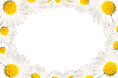 Daisy flowers frame. Floral frame made of common daisy flowers stock image
