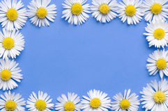 Daisy flowers frame Royalty Free Stock Image