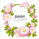 Daisy flowers frame with pink blossoms and green leaves vector. Illustration with place for your text isolated on white background. Border with lawn common Royalty Free Stock Photos