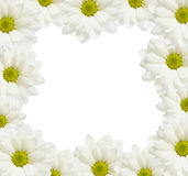 Daisy flowers frame Royalty Free Stock Photography