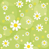 Daisies. Daisy flowers on a green background.  seamless pattern Royalty Free Stock Images
