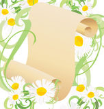 Daisy flowers, green grass and old paper scroll Royalty Free Stock Photography