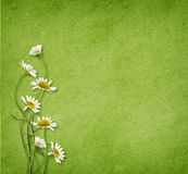 Daisy flowers on green paper. Daisy flowers in a corner of green paper background Stock Images