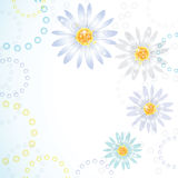 Daisy flowers. Stock Photos