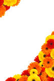 Daisy flowers half frame. Frame prepared with colorful daisy flowers royalty free stock image