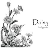Daisy flowers hand drawing vintage on white background. Daisy flowers for greeting card vector illustration