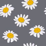 Daisy flowers heads. Seamless pattern. Vector illustration. Purple background Stock Images