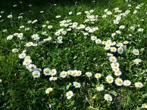 Daisy flowers heart shape on grass Stock Photography