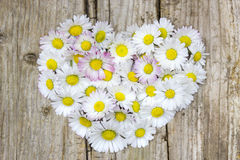 Daisy flowers in heart shape Royalty Free Stock Photo