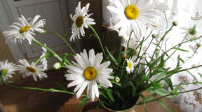 Daisy flowers in jug Royalty Free Stock Image