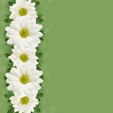 Daisy flowers line Stock Photo