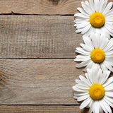 Daisy flowers on old wooden background Stock Photos