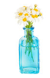 Daisy flowers posy in blue glass Royalty Free Stock Photography