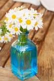 Daisy flowers posy Royalty Free Stock Photos