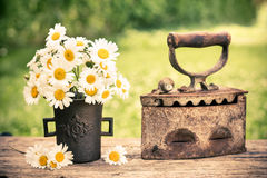 Daisy flowers in the pot in the garden Stock Photography