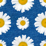 Daisy flowers seamless pattern on jeans background Royalty Free Stock Images