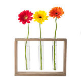 Daisy flowers in test tubes. Gerbera daisy flowers in test tubes isolated on white background Royalty Free Stock Photos